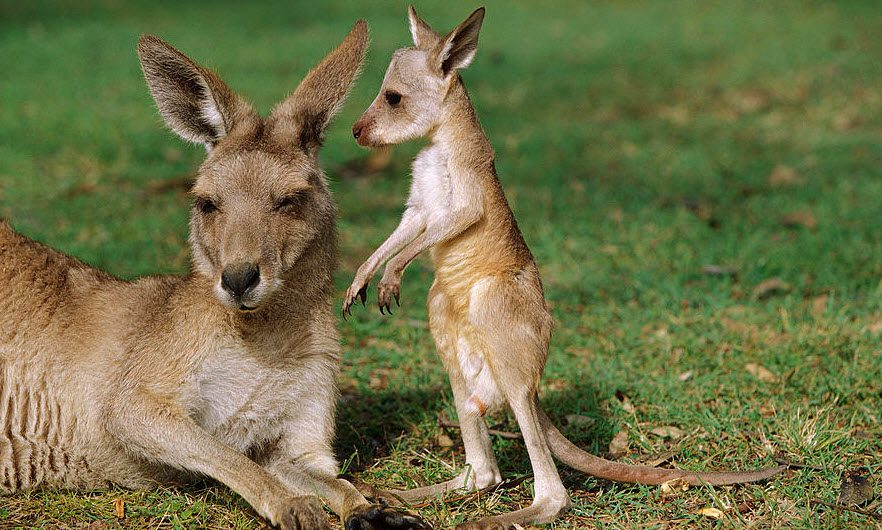 travel_kangaroo-2
